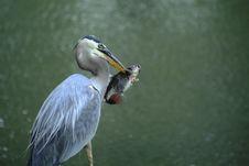 Free Gone Fishin  Stock Images - 14702634