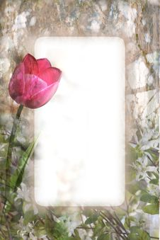 Free Tulip And Blossoms Royalty Free Stock Photos - 14702718