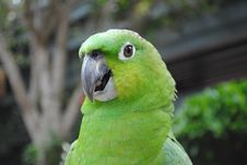 Free Green Parrot Royalty Free Stock Photography - 14703037