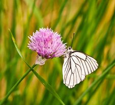 Free Butterfly On A Flower Royalty Free Stock Photography - 14703077