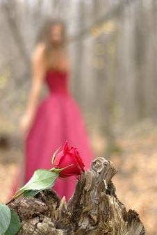 Free Rose And A Girl Stock Photos - 14703163