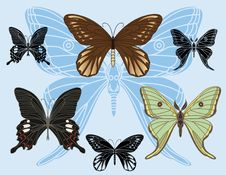 Set Of Colored Butterflies And Stencils Royalty Free Stock Images