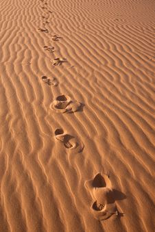 Free Footsteps Stock Photos - 14705853
