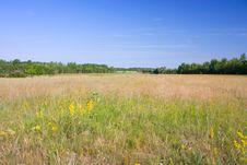Free Summer Landscape Royalty Free Stock Image - 14705946