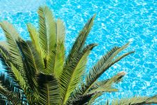 Palm Tree On Blue Hotel Pool Stock Photos