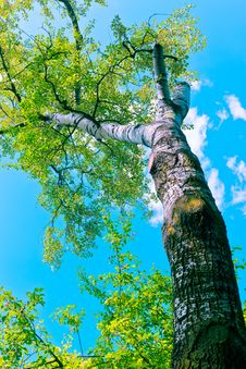 Free Tree Canopy Royalty Free Stock Images - 14706089