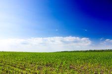 Free Summer Landscape Royalty Free Stock Photos - 14706138