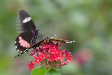 Free Butterfly On Red Flowers Stock Image - 14709161