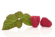 Free Raspberry Fruit Stock Photo - 14709990