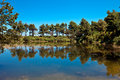 Free Pond With Trees Reflected Royalty Free Stock Image - 14713396