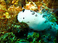 Free Bunny Nudi Royalty Free Stock Images - 14716439