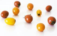 Free Tomatoes Royalty Free Stock Image - 14710536