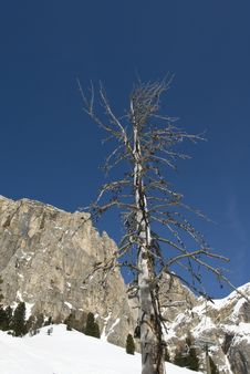 Free Dead Tree Against A Clear Blue Sky. Royalty Free Stock Photography - 14710747