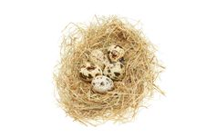 Free Birds Eggs In A Nest Royalty Free Stock Photos - 14710868
