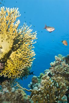 Free Pristine Tropical Coral Reef. Stock Photos - 14710873