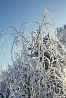 Free Winter Landscape Royalty Free Stock Photos - 14711498