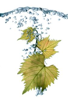 Free Grape Leaves Royalty Free Stock Images - 14711899