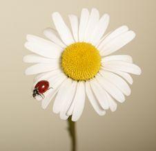 Free Flower Stock Photos - 14712143