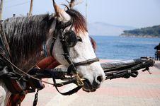 Free White Horse Royalty Free Stock Photos - 14712178