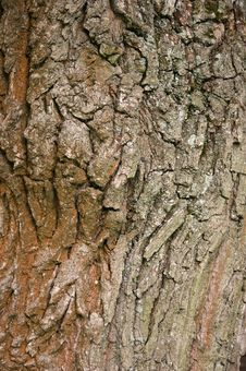 Free Tree Bark Stock Photo - 14713800
