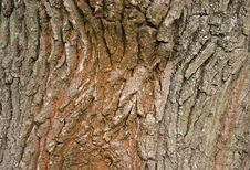 Free Tree Bark Royalty Free Stock Photo - 14713805