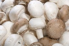 Pile Of White And Brown Mushrooms Royalty Free Stock Image