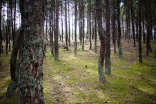 Free Magic Forest Royalty Free Stock Photo - 14714295