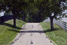 Free Oak Lined Lane In Summertime Stock Image - 14714671