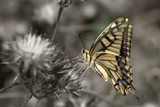 Free Beautiful Butterfly Royalty Free Stock Images - 14717199
