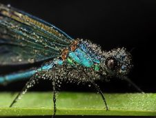 Free Blue Dragonfly Stock Image - 14718661