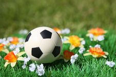 Free Soccer Ball Royalty Free Stock Photography - 14719307