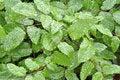 Free Raindrops On Leaf Royalty Free Stock Photos - 14720738