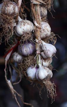 Free Garlic Plait Royalty Free Stock Images - 14720989