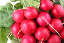 Free Bunch Of Radishes Stock Photo - 14721230