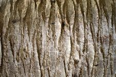 Free Old Wooden Trunk Royalty Free Stock Photos - 14722858