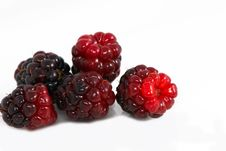 Free Berry Royalty Free Stock Images - 14724399