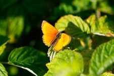 Free Butterfly Stock Image - 14725111
