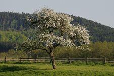 Free Apple Tree In Lower Saxony, Germany Stock Photos - 14725203