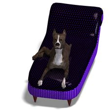 American Staffordshire Terrier Dog. 3D Rendering Royalty Free Stock Images