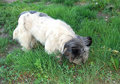 Free Stray Dog Royalty Free Stock Photo - 14732955