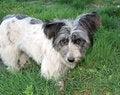 Free Stray Dog Stock Photos - 14733133