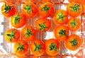 Free Tomatoes Stock Photo - 14738870