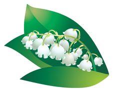 Free Bellflower Stock Images - 14730284