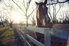 Free Horse And Fence Royalty Free Stock Photos - 14730328