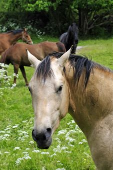 Free Horse Portrait Stock Photo - 14730590