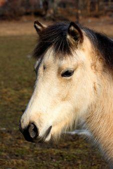 Free White Horse Royalty Free Stock Photos - 14730688