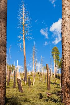 Yosemite Forest Royalty Free Stock Photography
