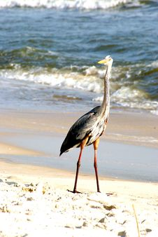 Free Bird On The Beach Royalty Free Stock Photos - 14731338