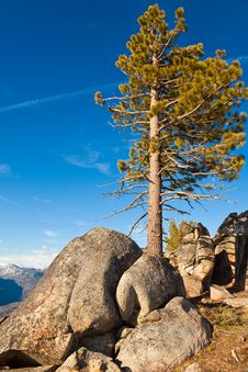 Free Pine And Boulders Royalty Free Stock Photos - 14731378