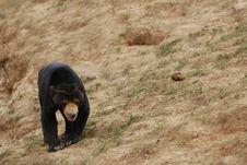 Free Bear Stock Image - 14735131